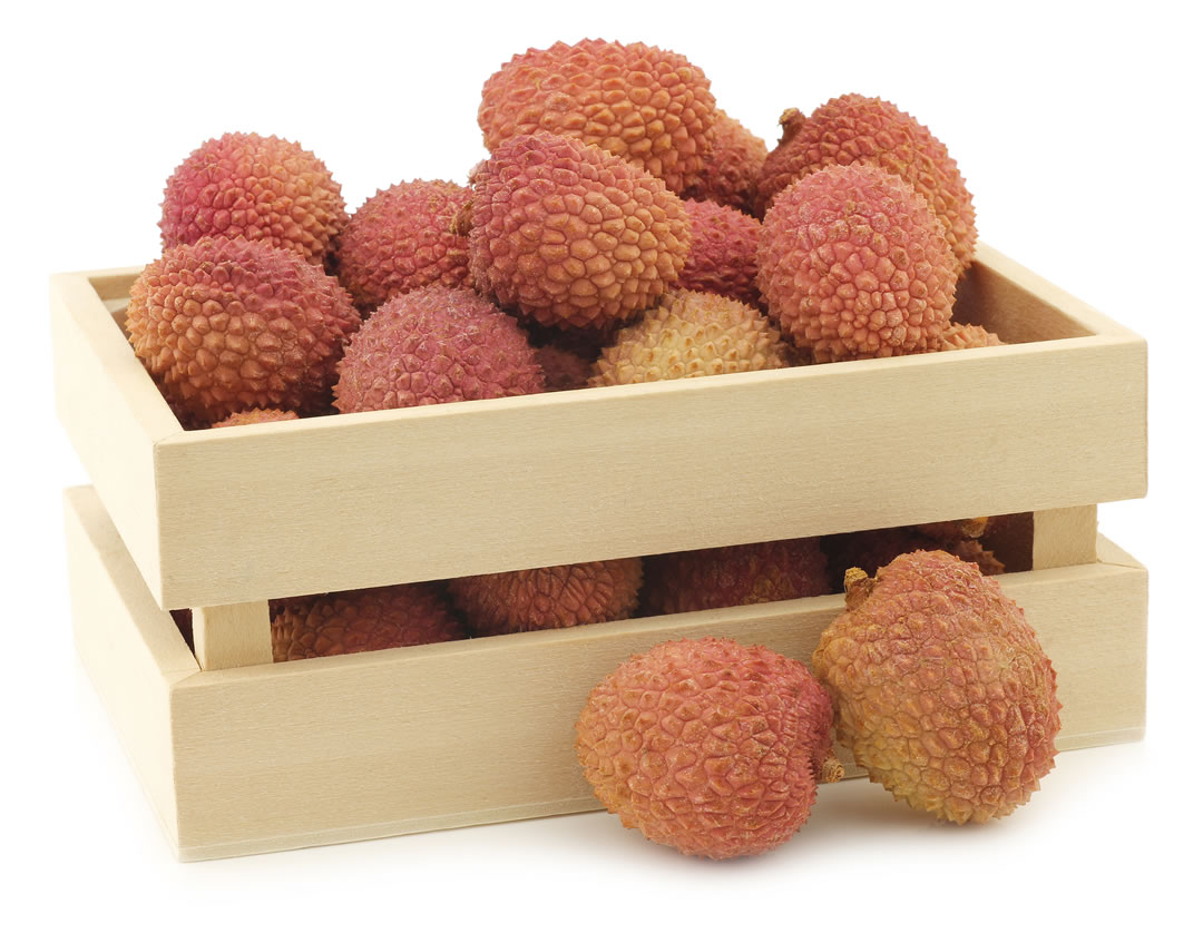 how to grow lychee at home